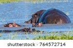 hippo pool  moremi game reserve ... | Shutterstock . vector #764572714
