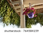 a flower pot in a fish... | Shutterstock . vector #764584159