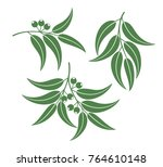 eucalyptus set. isolated... | Shutterstock .eps vector #764610148
