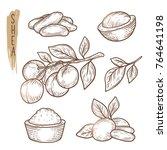 sketch of shea elements. vector ... | Shutterstock .eps vector #764641198