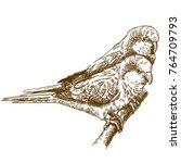 vector antique engraving... | Shutterstock .eps vector #764709793