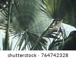 tropical palm leaves   Shutterstock . vector #764742328