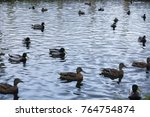 birds on the pond. a flock of... | Shutterstock . vector #764754874