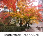 Small photo of Colorful trees on stair sway sides