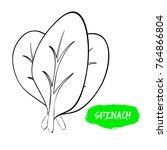 vector illustration of spinach