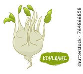 vector illustration of kohlrabi.... | Shutterstock .eps vector #764866858