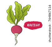 vector illustration of a radish.... | Shutterstock .eps vector #764867116