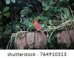 beautiful bright red male... | Shutterstock . vector #764910313