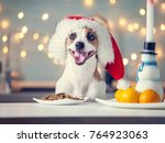 Stock photo dog in christmas hat eating food happy pet santa 764923063