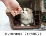 Stock photo a person playing with a gray fluffy persian cat with a black nose in a brown basket 764958778