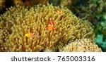 anomone fish underwater world | Shutterstock . vector #765003316