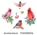 watercolor illustrations of... | Shutterstock . vector #765008056