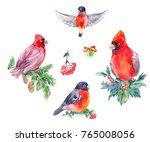 watercolor illustrations of... | Shutterstock . vector #765008056