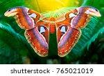 Beautiful Big Butterfly  Giant...