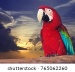 Portrait Of Single Red Macaw...