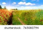 beautiful landscape field with...