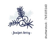 juniper berry vector drawing.... | Shutterstock .eps vector #765105160