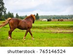 Stock photo chestnut horse looking at herd 765146524