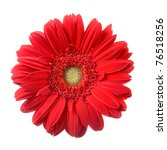 Red Gerbera  Isolated  On A...