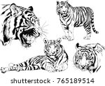 vector drawings sketches... | Shutterstock .eps vector #765189514