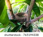 Bird's Nest In A Branch Tree...
