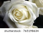 Stock photo roses white roses 765198634