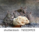 family of mice eating cake in... | Shutterstock . vector #765224923