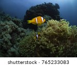 clownfish and sea anemone ... | Shutterstock . vector #765233083