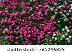 Rose Flowers At Ashikaga Park...