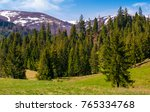spruce forest on a grassy hill...   Shutterstock . vector #765334768