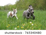 Stock photo two cute dogs have fun on a field and running together 765340480