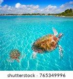 Akumal Beach Turtles Photomount Riviera - Fine Art prints