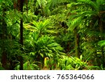 tropical rainforest  queensland ... | Shutterstock . vector #765364066