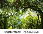 rain forest view from inside  | Shutterstock . vector #765368968