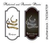 cordyceps  ophiocordyceps...   Shutterstock .eps vector #765369709