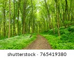 winding footpath through green... | Shutterstock . vector #765419380