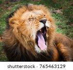 portrait of a majestic male... | Shutterstock . vector #765463129