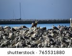 juvenile red footed booby a... | Shutterstock . vector #765531880