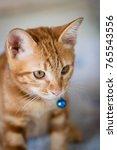Stock photo beautiful orange cat with yellow eyes 765543556