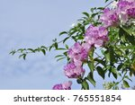 bouquet of flower.a group of... | Shutterstock . vector #765551854