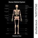 3d illustration of human... | Shutterstock . vector #765573760