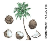 coconut. a whole coconut  half  ... | Shutterstock .eps vector #765627148