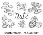 hand drawn nuts set  almond ... | Shutterstock .eps vector #765630484