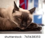 the cat is sleeping in a warm... | Shutterstock . vector #765638353
