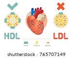 what is lipoprotein  ... | Shutterstock .eps vector #765707149