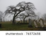 Spooky graveyard scene complete with scary trees and deep fog - stock photo