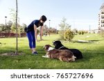 Stock photo two dogs laying obey training selective focus 765727696