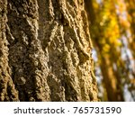 close up of a log in the forest ... | Shutterstock . vector #765731590