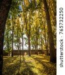 sunlight in the autumn forest.... | Shutterstock . vector #765732250