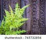 beautiful green ferns on the... | Shutterstock . vector #765732856